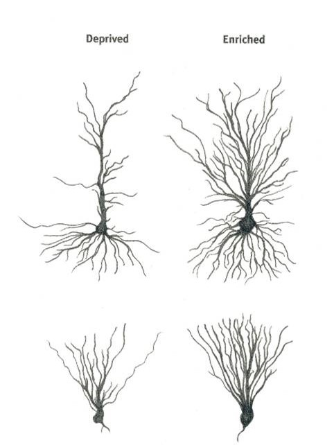"""Neurons that fire together wire together"" Donald Hebb"